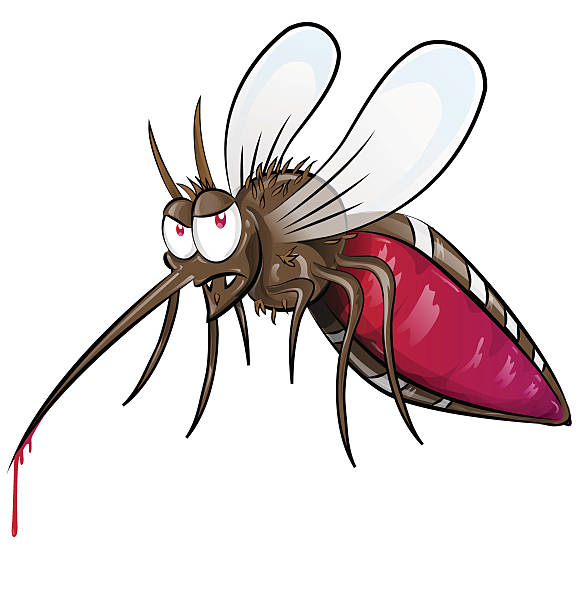 mosquito  cartoon isolated on white background vector art illustration