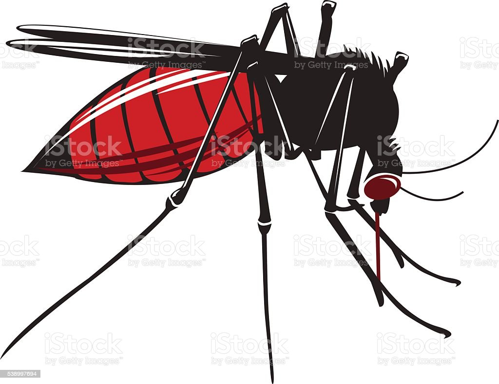 Mosquito drinks blood isolated on white background. vector art illustration
