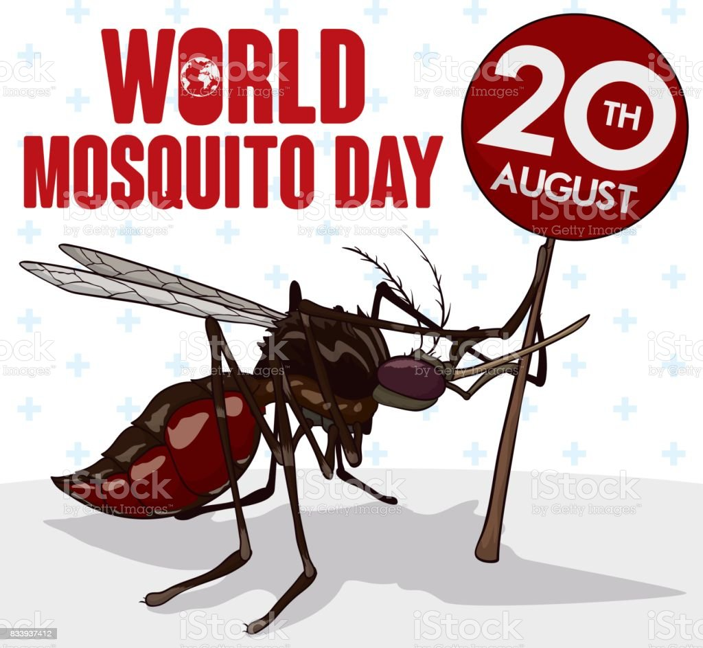 Mosquito Holding a Sign with Date for World Mosquito Day vector art illustration