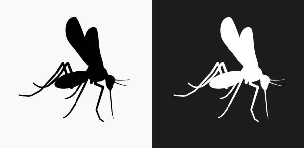 illustrazioni stock, clip art, cartoni animati e icone di tendenza di mosquito icon on black and white vector backgrounds - zanzare
