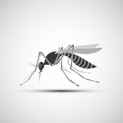 Mosquito Icon with stinger isolated on white background.