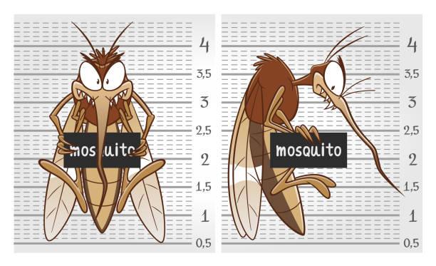 illustrazioni stock, clip art, cartoni animati e icone di tendenza di mosquito on police lineup - zanzare