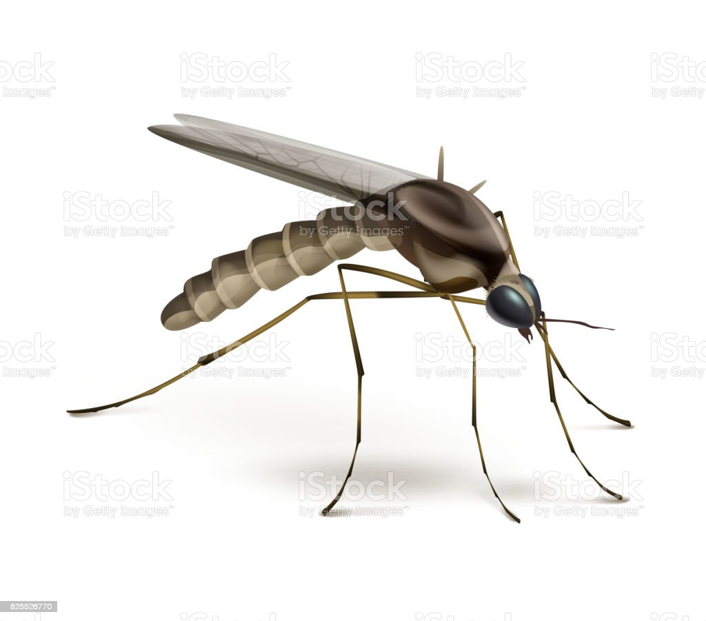Mosquito on white background vector art illustration
