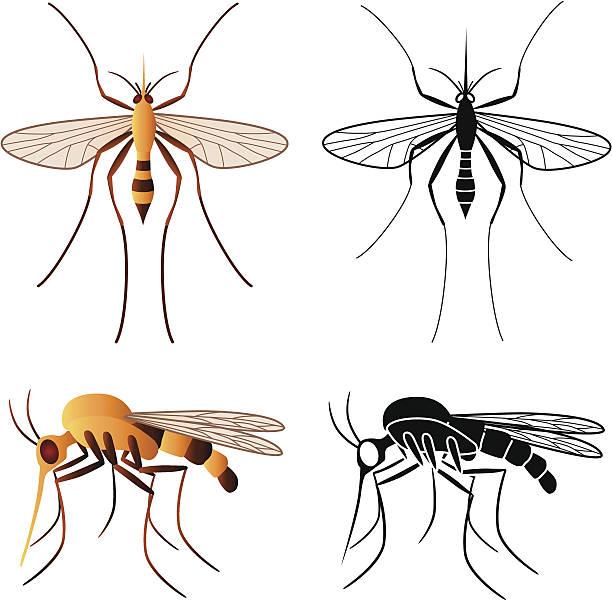 illustrazioni stock, clip art, cartoni animati e icone di tendenza di zanzara - zanzare