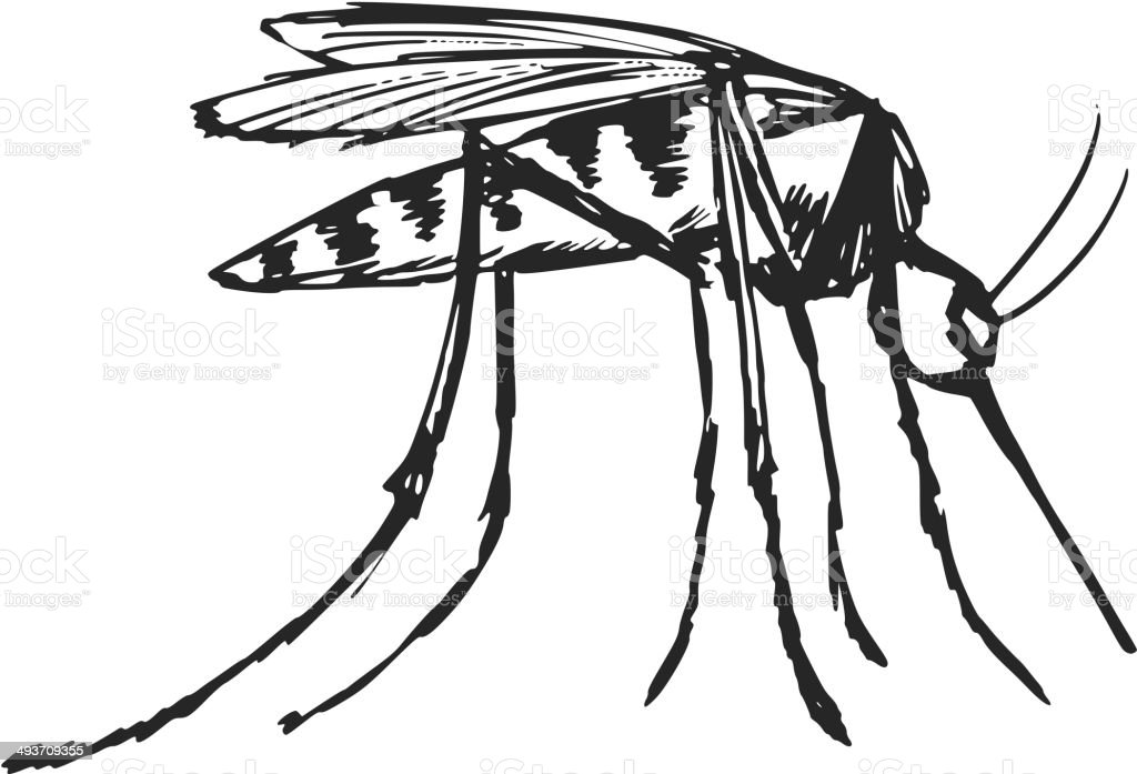 mosquito royalty-free mosquito stock vector art & more images of biology