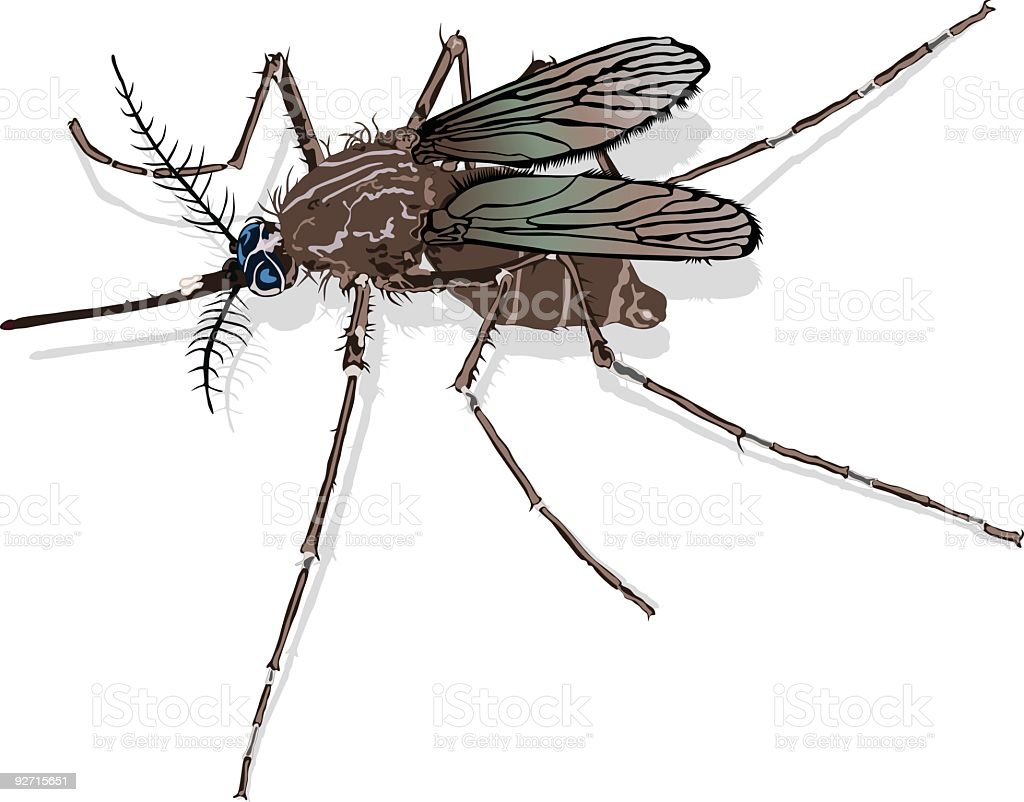 Mosquito (Vector) vector art illustration