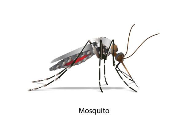 illustrazioni stock, clip art, cartoni animati e icone di tendenza di mosquito vector - zanzare