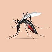 mosquito vector,sign