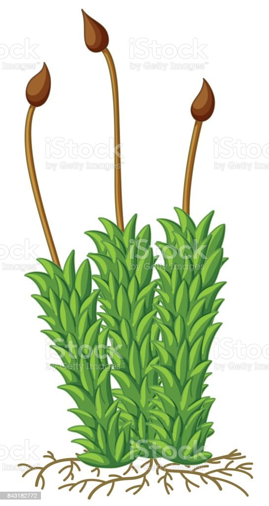 Musgo de planta com raízes - ilustração de arte em vetor