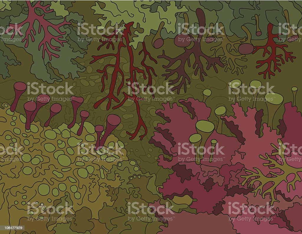Mosses and lichens vector art illustration