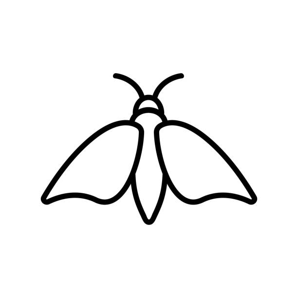 Moth icon vector. Isolated contour symbol illustration Moth icon vector. A thin line sign. Isolated contour symbol illustration image stock illustrations