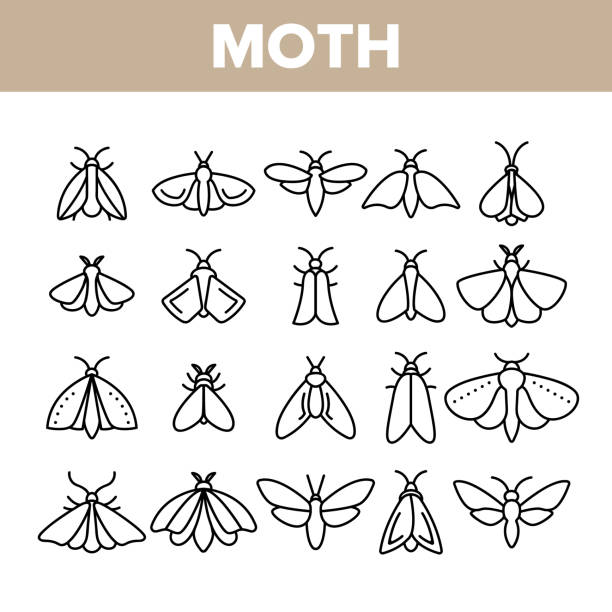 Moth, Insects Entomologist Collection Vector Linear Icons Set Moth, Insects Entomologist Collection Vector Linear Icons Set. Moth Species And Types Outline Cliparts. Flying Insects With Wings Pictograms Collection. Butterflies Thin Line Illustration fly insect stock illustrations