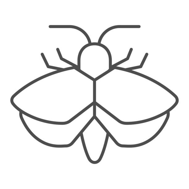 Moth thin line icon, Insects concept, mole sign on white background, Moth silhouette icon in outline style for mobile concept and web design. Vector graphics. Moth thin line icon, Insects concept, mole sign on white background, Moth silhouette icon in outline style for mobile concept and web design. Vector graphics arthropod stock illustrations