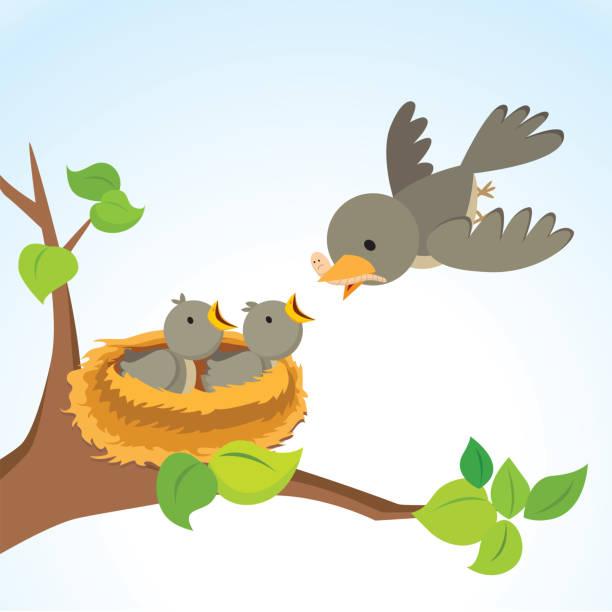 bildbanksillustrationer, clip art samt tecknat material och ikoner med mamma fågel matar fågelungar - bo