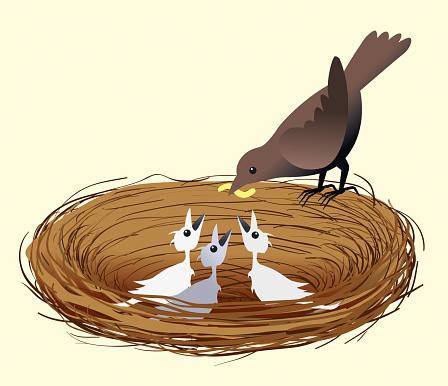 Mother bird feeding her chicks