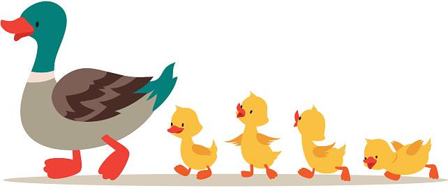 Mother duck and ducklings. Cute baby ducks walking in row. Cartoon vector illustration