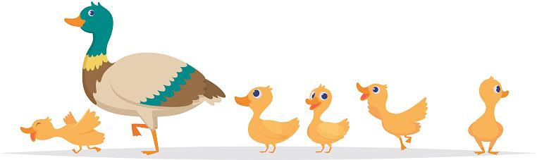 Mother duck. Row of wild ducks birds family walking vector cartoon collection. Duck mother, wild duckling illustration