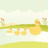 Mother duck swimming with her ducklings