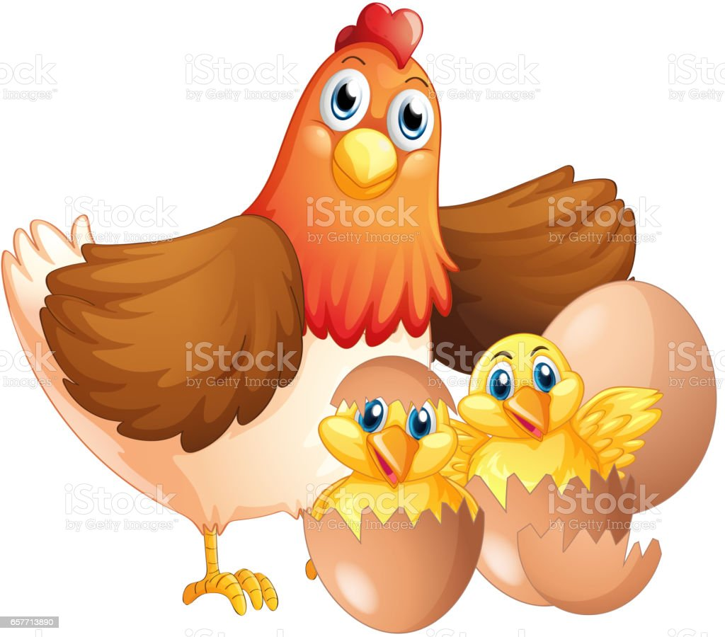 Mother hen and two chicks vector art illustration