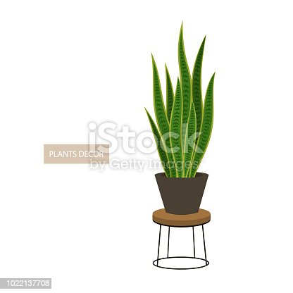 mother in law tongue houseplant in decorative pot and metal planter holder vector illustration