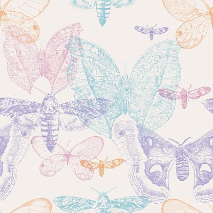 Moths & Butterflies Seamless Repeat Pattern
