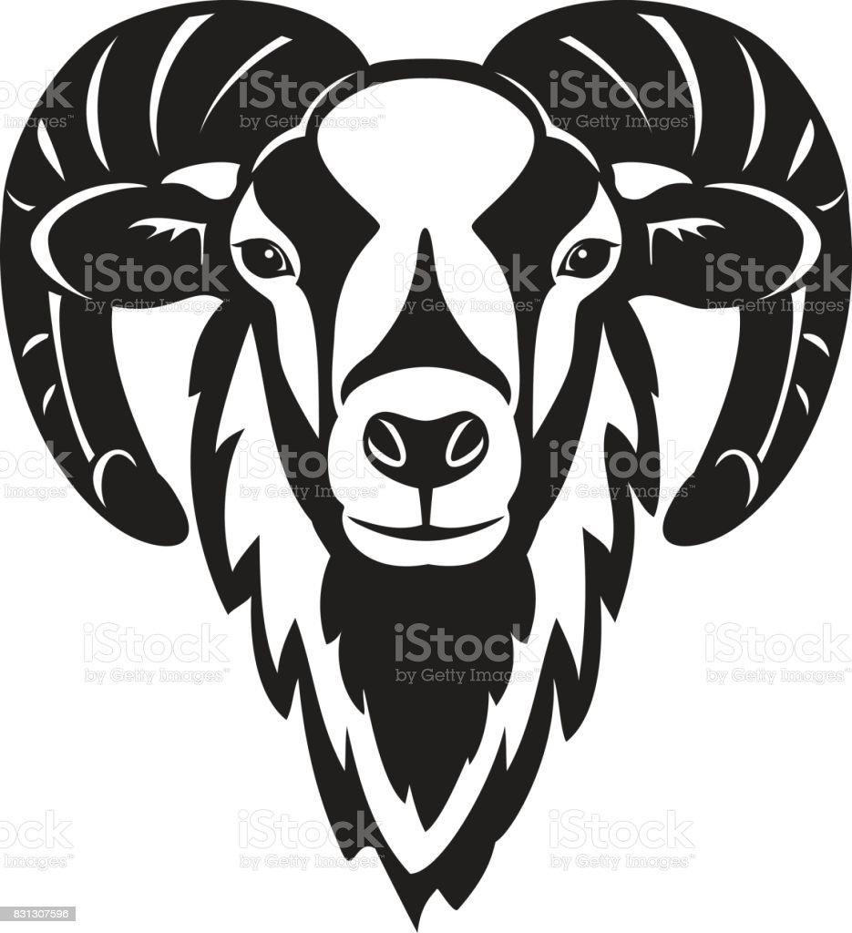 Mouflon sheep  head vector illustration vector art illustration