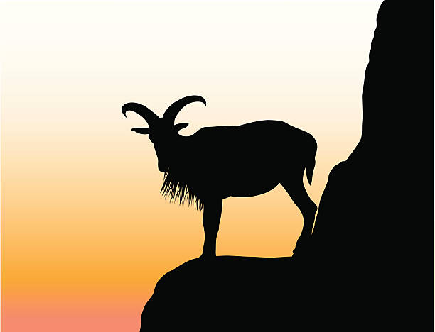 mountaingoat - bergziegen stock-grafiken, -clipart, -cartoons und -symbole