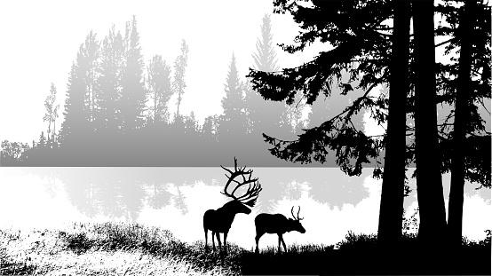 Mountain Lake Wildlife