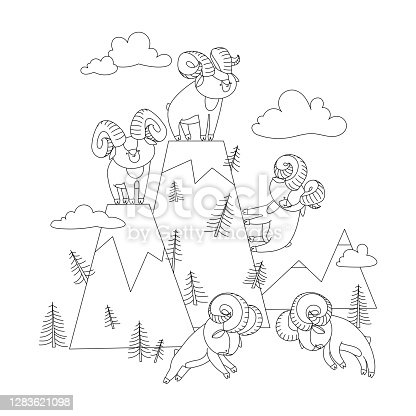 istock mountain landscape with set of young cute horned argali males who staged a tournament 1283621098
