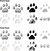 Mountain lion footprints