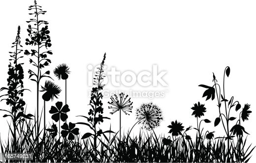 Silhouettes of variable plants and flowers