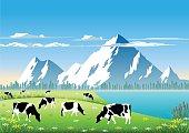 Holstein Cattle  in a Mountain Field.