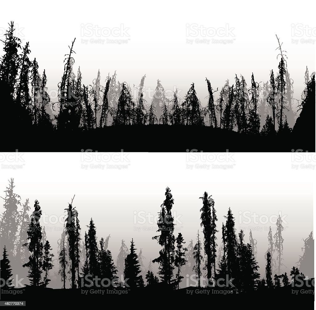 Mountain Pine Forest vector art illustration
