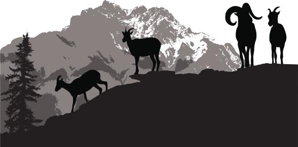 Mountain Sheep Vector Silhouette