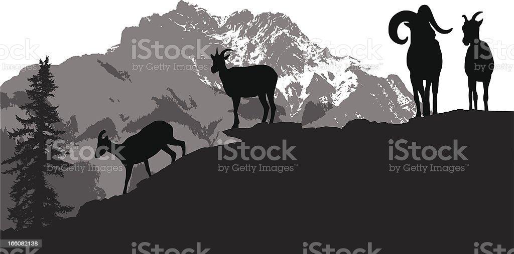 Mountain Sheep Vector Silhouette vector art illustration