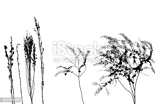 Dry weeds in silhouettes
