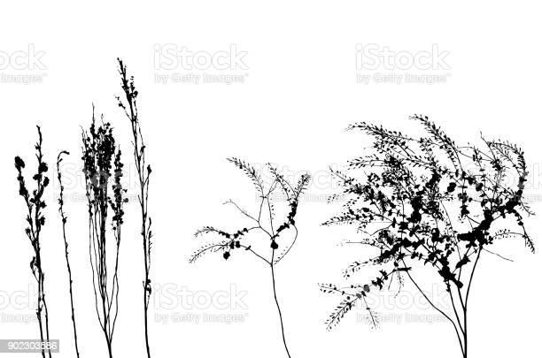 Mountain weeds vector id902303586?b=1&k=6&m=902303586&s=612x612&h=gxchv63ac4wrmphn56xu4ccf81xqigm2xv7udnevboo=