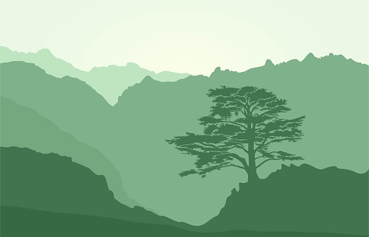 Mountains landscape with rocks and lebanese cedar