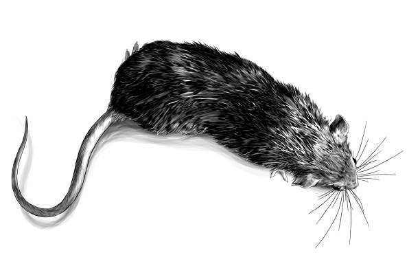 mouse crawling top view – artystyczna grafika wektorowa