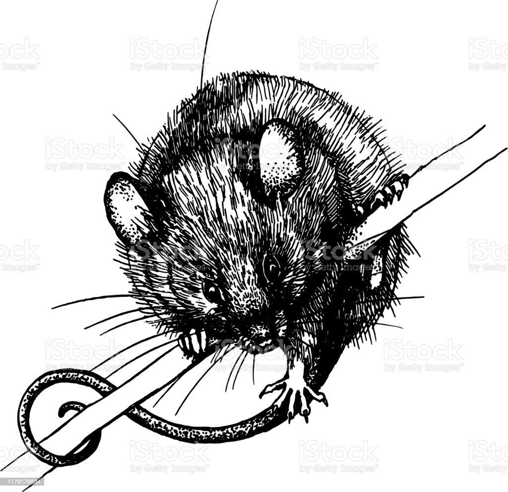 Drei Ratten - Download Kostenlos Vector, Clipart Graphics, Vektorgrafiken  und Design Vorlagen