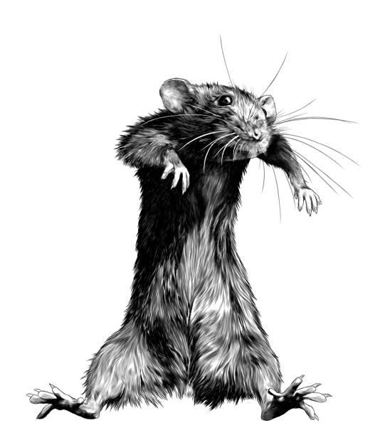 mouse stands tall and dances – artystyczna grafika wektorowa