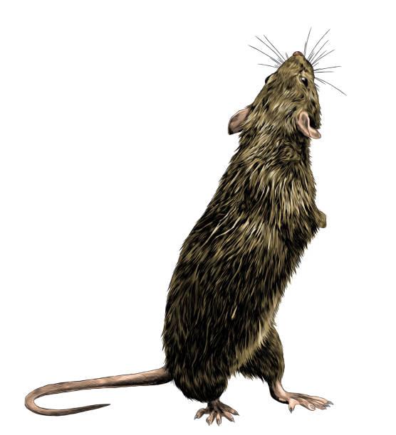 mouse stands tall on its hind legs and looks back – artystyczna grafika wektorowa