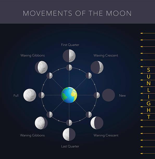 illustrazioni stock, clip art, cartoni animati e icone di tendenza di movimenti della luna vettoriale - luna gibbosa