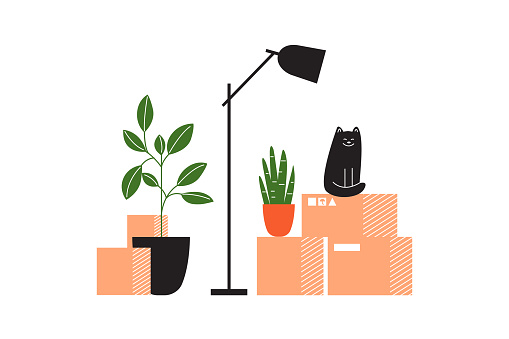 Moving into new house concept with carton boxes with stuff, lamp, houseplants and cat