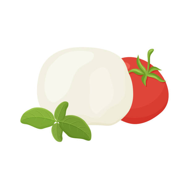 Mozzarella ball, tomato, green basil branch. Mozzarella ball, tomato, green basil branch. Hand drawn cartoon illustration. Handmade cheese. Isolated vector image on white background. Color flat clip art mozzarella stock illustrations