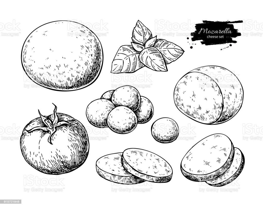 Mozzarella cheese vector drawing. Hand drawn round piece, baby mozzarella vector art illustration