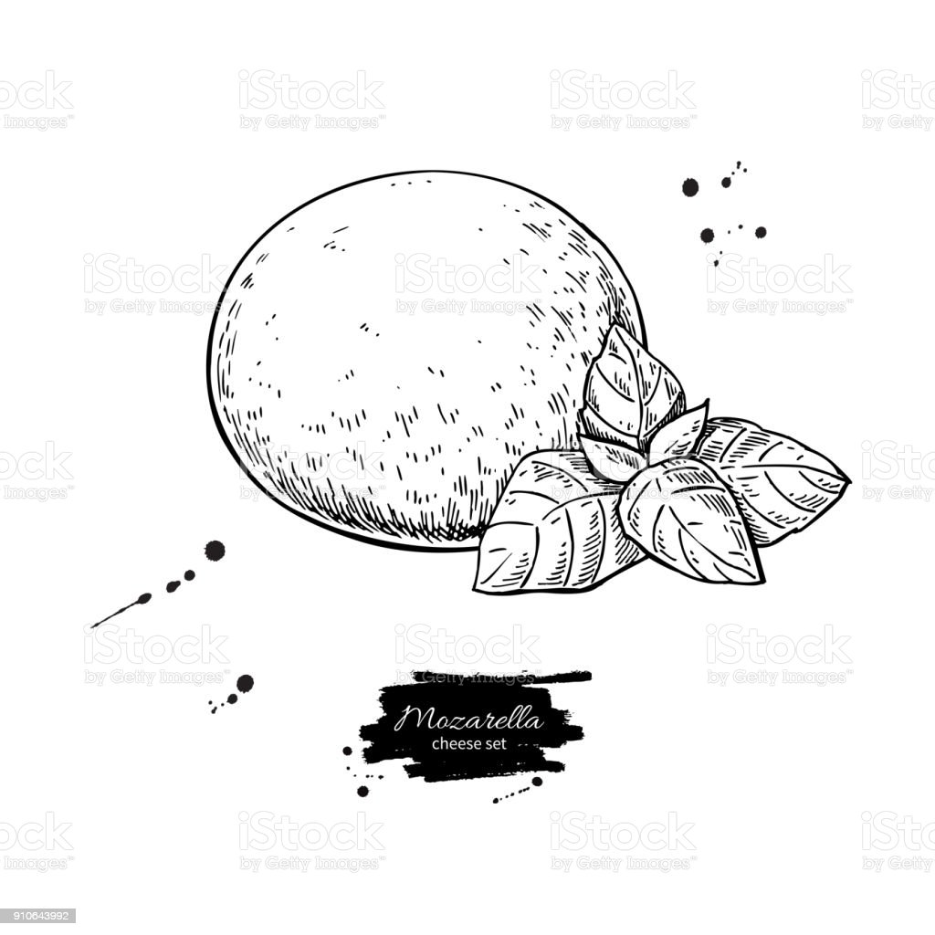 Mozzarella cheese vector drawing. Hand drawn round piece with ba vector art illustration