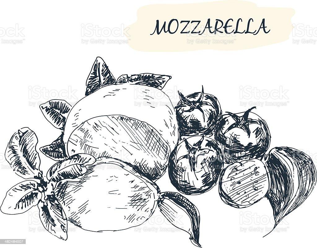Mozzarella vector art illustration