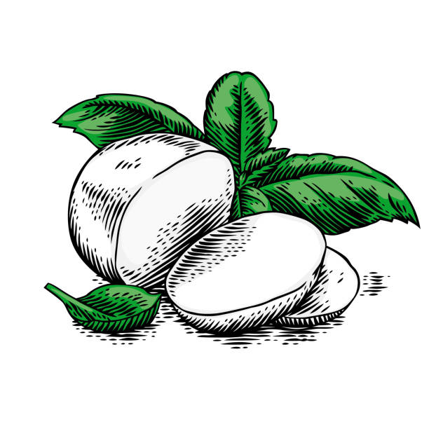 Mozzarella with basil leaves Piece and slices of mozzarella with fresh green basil leaves mozzarella stock illustrations