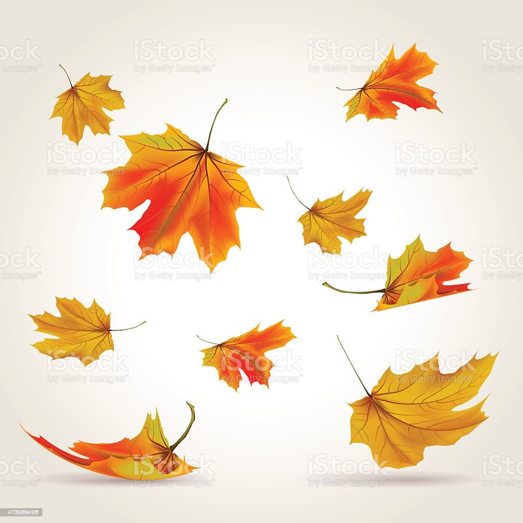 Multicolored autumn leaves falling